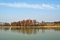 湖上树影 by 徒歌 - panoramio.jpg
