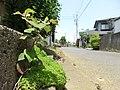 道路と花 - panoramio (2).jpg