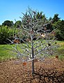 0940 The Memory Tree (14410193540).jpg