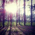 1003 ป่าแดด.jpg