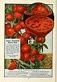 112 superb varieties for market gardeners season of 1926 (18142723616).jpg
