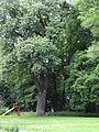 16141 małopolskie gm Skawina Wielkie Drogi park 1.JPG