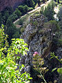 187 Esperó rocós a la vall de Sant Miquel, des del camí de l'Ermita.JPG