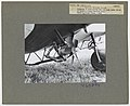 1950. Close-up of wind driven fan and pump under BT-13 of Tyler's Flight Service Corp. Western spruce budworm control project. Umatilla National Forest, Oregon. (32901369535).jpg