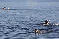 1st MSOB Canine Handler Surf Passage and Zodiac insert training 160209-M-AX605-022.jpg