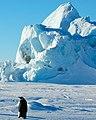 2007 Snow-Hill-Island Luyten-De-Hauwere-Emperor-Penguin-112.jpg