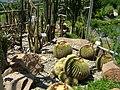 2008 07 Botanical Garden Meran 71490R0374.jpg