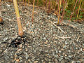 2012-08-21 18-45-06-plantes-asphalte.jpg