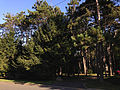 2014-08-30 08 20 15 Wooded lot at the intersection of Broad Avenue and Brenwal Avenue in Ewing, New Jersey.JPG