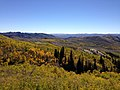 2014-10-04 13 43 49 View of Aspens during autumn leaf coloration from Charleston-Jarbidge Road (Elko County Route 748) in Copper Basin about 9.4 miles north of Charleston, Nevada.jpg