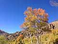 2014-10-04 14 04 30 View of Aspens during autumn leaf coloration along Charleston-Jarbidge Road (Elko County Route 748) in Copper Basin about 11.2 miles north of Charleston, Nevada.JPG