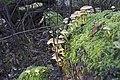 20141113 010 Well De Hamert Paddenstoel (15163023214).jpg