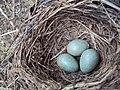 2015-04-vajíčka.JPG