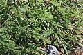 2015.08.22 12.25.12 IMG 0271 - Flickr - andrey zharkikh.jpg