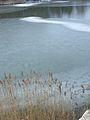 20150219 61 Wienerwaldsee (Large) (16395921379).jpg