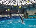 2017-05-16 Show in Kyiv Dolphinarium 08.jpg