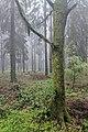 2019-05-21 112929 Landschaftsschutzgebiet Norddeister.jpg