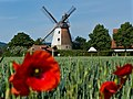 2019-06-09 Windmühle Meißen (Minden) 01.jpg