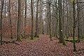 20191203Frohn-Wald-Weg 03.jpg