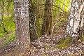 2019 05 Riezupes dabas parks (33).jpg
