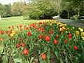 205 Tulpenbeet.JPG