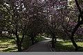 21-227-5001 Парк резиденції Шенборнів, Чнадієво.jpg