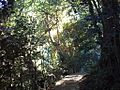 5 Table Mountain - Contour path through indigenous forest - CT2.JPG