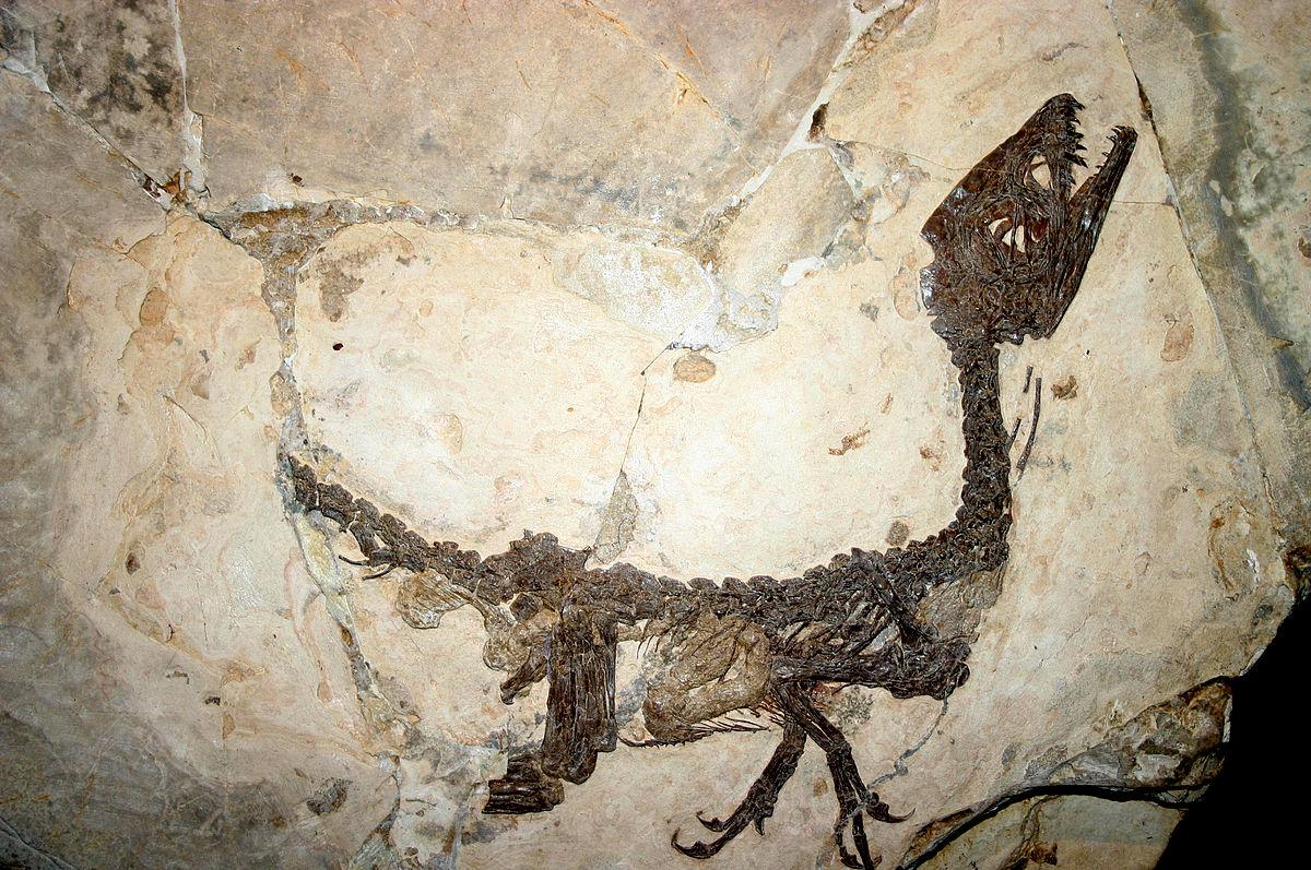1200px-9121_-_Milano%2C_Museo_storia_naturale_-_Scipionyx_samniticus_-_Foto_Giovanni_Dall%27Orto_22-Apr-2007a.jpg