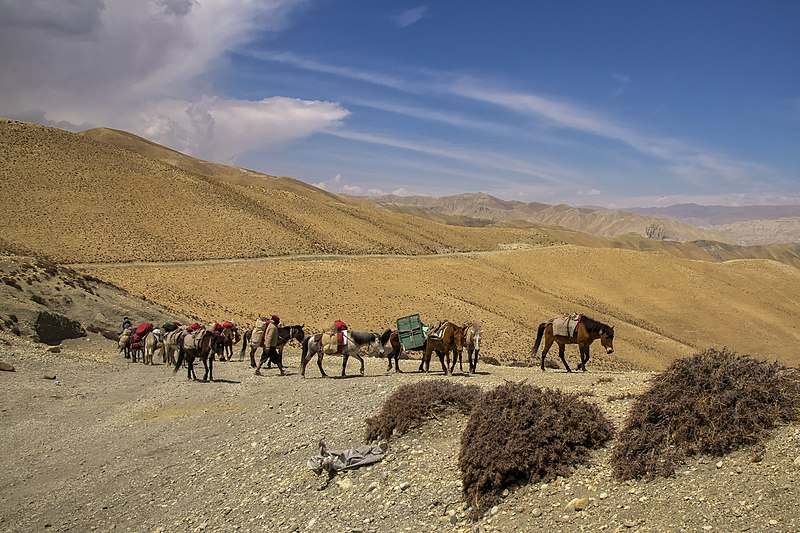 File:ACAP Desert Caravan.jpg
