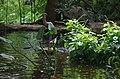 AZBG Crane in pond.jpg