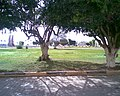 A Benghazi park2.jpg