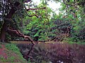 A Pond In Osterley Park - London. (28090282132).jpg