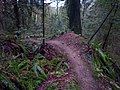 A banked corner on Corey's Corner trail - panoramio.jpg