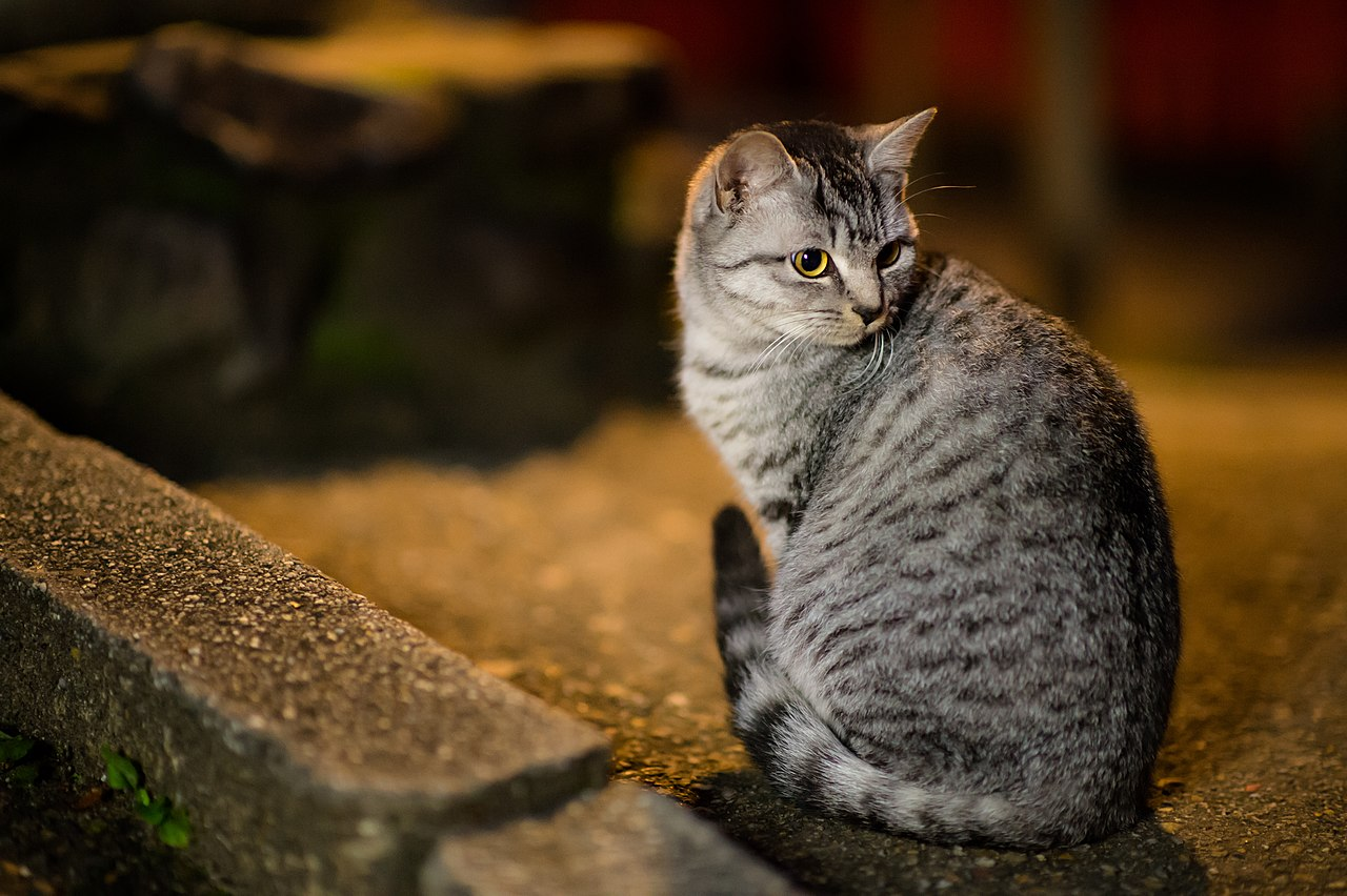 A cat in Fushimi Inari Shrine (11331139384).jpg
