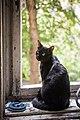 A cat in communal flat in Saint Petersburg.jpg