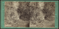 A stroll through the woods at Lake George, N.Y, from Robert N. Dennis collection of stereoscopic views.png