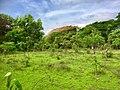 Aarey forest.jpg
