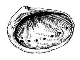Abalone (PSF).png