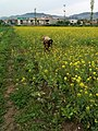 Abbottabad beautiful fields1.jpg