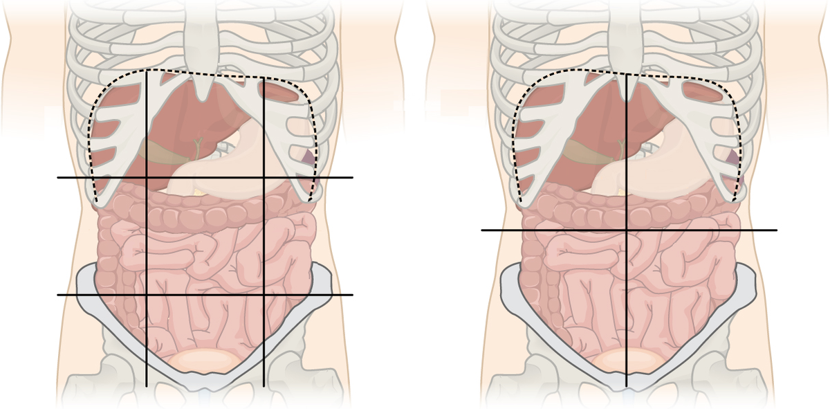 Quadrants and regions of abdomen - Wikipedia