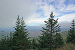 Abies fraseri Blue Ridge in NC.jpg