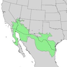 Acacia greggii range map 1.png