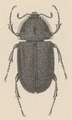 Aclopus - Print - Iconographia Zoologica - Special Collections University of Amsterdam - UBAINV0274 019 15 0020 (cropped).tif