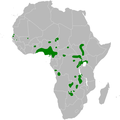 Acrocephalus rufescens distribution map.png