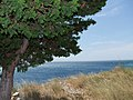 Adriatyk - panoramio.jpg