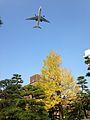 Airplane and ginkgo biloba tree with yellow leaves in Hakozaki Campus, Kyushu University.jpg