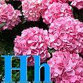 Alfabet roślin - literka H.jpg