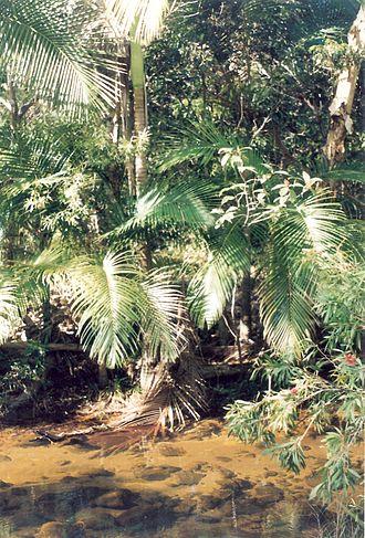 Alligator Creek, Queensland (Townsville) - Alligator Creek