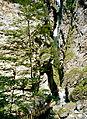 Alpy Landscape wikiskaner 28.jpg