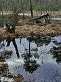 Altwarmbüchener Moor März 2018 (05).jpg